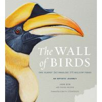 英文原版 �B之�Γ嚎的���B��W���室�B��D�V Jane Kim手�L The Wall of Birds: One Pla