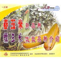 春玉米新品种-糯米优良品种介绍(一片装)VCD( 货号:103510001200307)