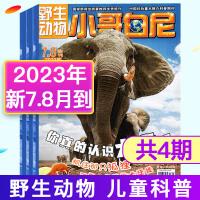 【11期8本打包】小哥白尼杂志野生动物画报2020年1.2月+2019年1.2/3/4/5/6/7.8/12月青少年儿