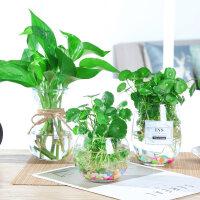 {夏季贱卖}水培绿萝玻璃花瓶透明植物风信子客厅插花创意花盆器皿家用小摆件 中等
