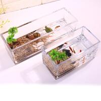 生态瓶微景观水族箱造景斗鱼缸水养植物容器创意鱼缸造景花瓶 中等