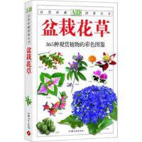 365养花图鉴/生活实用植物图鉴系列 正版 徐晔春 9787811201543