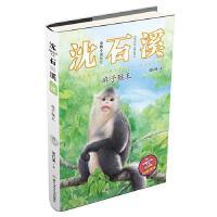 麻子猴王 正版 沈石溪 9787559711373