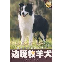 边境牧羊犬 文俸勇著 中国林业出版社