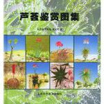 芦荟鉴赏图集 朱亮锋,何其敏,郑永利 上海科学普及出版社